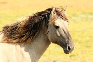 horse-197199_640