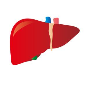体がむくむむくみと肝臓の関係肝臓障害