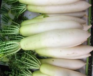 大根おろしの栄養価を高めるコツ
