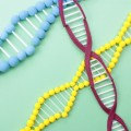 無月経になる原因 【ダイエット・ストレス・遺伝子疾患】とその対処法 無月経は早期治療が大切