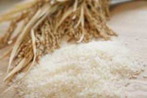 話題の麹は米を発酵させてつくったもの