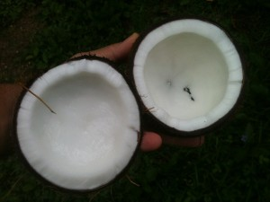 インド美人の長くて美しい髪はココナッツオイルで作られる?