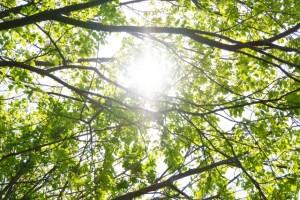 骨を強くするには日光浴も効果的です
