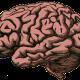 brain-512758_640