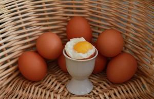 妊娠中に卵