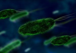 bacteria-106583_640