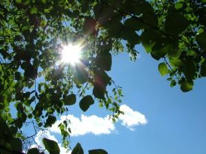 日光アレルギーは日光に当たることによってアレルギーの症状が表れます。