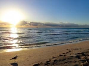 タラソテラピーという海洋療法