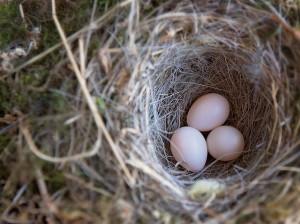 排卵誘発剤を用いるとどのくらいの排卵数になるか