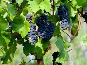 ワインが大量生産されているようなイタリアやフランスといった地域で生産されています。