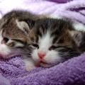 赤ちゃんの泣き声が猫みたい…染色体異常のネコ鳴き症候群なの?