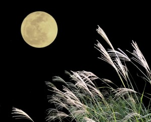 十五夜にはのんびりと月を眺めて過ごしてみてはいかが?