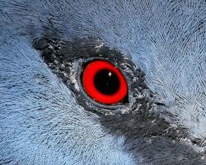 鳥インフルエンザに感染した鳥はどうなるのか