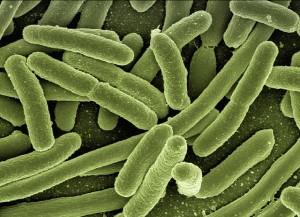 細菌感染や治療器具で傷がついて腹痛を起こす人も