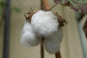 綿などの天然繊維