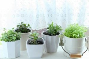 観葉植物の力を借りよう!