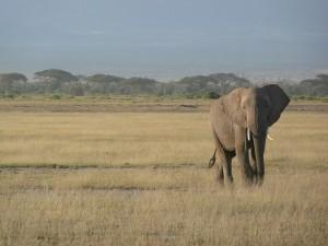 ケニアでサファリツアーに参加するなら