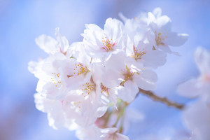 期待と不安でいっぱいな春先