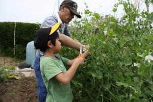 静電気を放出するという意味において土や植物をさわる家庭菜園や畑仕事は非常に有効