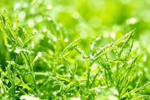 カモミールは花粉症からくるストレスや不眠などに効果的