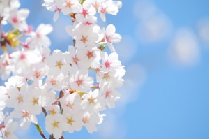 実は春の体調不良に悩んでいる人が多いようです