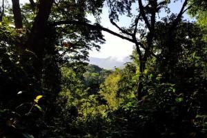アフリカ ウガンダの森林