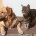 動物別・感染経路別・リスク別、動物由来感染症の種類分け