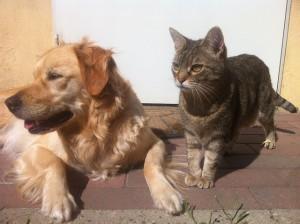 犬と猫に共通する動物由来感染症はたくさんあります