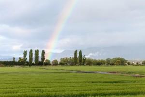 雨の降り始めと雨上がりの花粉は増える
