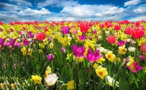 春の寒さもやってくる