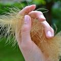 キューティクルオイルで爪ケア 乾燥対策にキューティクルオイル