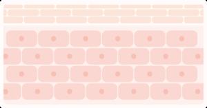 180761角質層 角質
