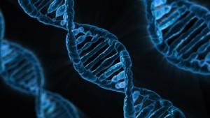 白血病の発症には遺伝子や染色体の異常が深く関係しています