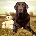 パブロフの犬とは?生命が持つ条件反射の面白さで生活を楽しく