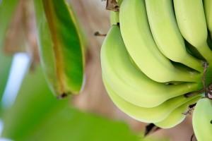 ダイエットのときには青バナナ!