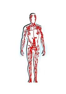 human-65819_640 人体 全身 血液 血流 血管