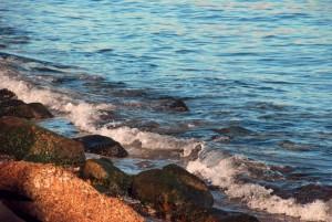 なぜ海苔を消化できる遺伝子があるのか??