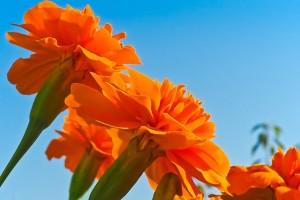 flower-1648815_640