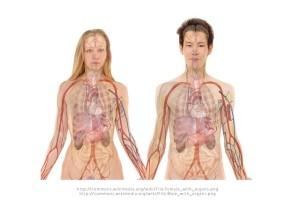 男性から女性の性別適合手術