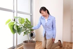 a9fff38e0df0c0cd521517715d9e5857_s 観葉植物に水をやる女性