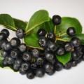 新たなスーパーフルーツ現る!アロニアダイエットの効果とは?