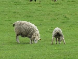 羊肉のダイエット効果