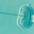 不妊治療の採卵とは?痛みはあるの?費用はどのくらい必要?