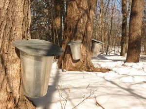 天然のメープルツリーの樹液。