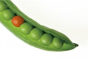 輸入されるものが心配 「非」遺伝子組み換えが本当に安全か?